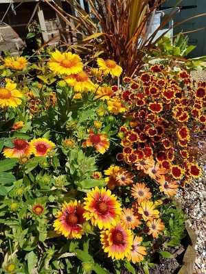 A Sun Garden