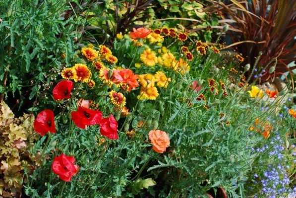 Devas/Plant Spirits
