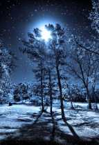 Birch Moon Meditation : for the January Full Moon