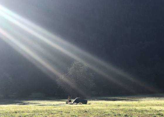 Your Undimmed Lightness of Being