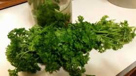 Everything's better with Parsley on it