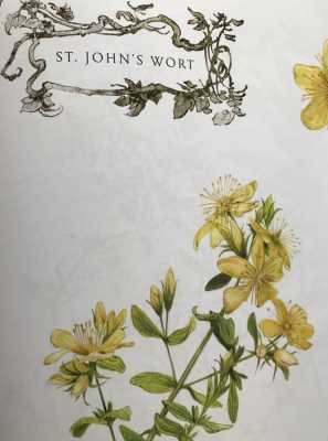 Magical Midsummer's Day & Saint John's Wort