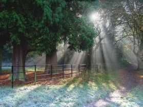Stillness and Strength: A Runic Reflection at Imbolc