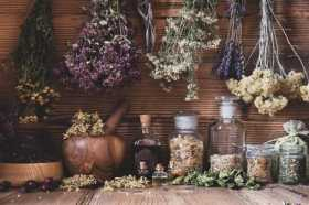 Botanical Bliss: Garden Your Way to Happiness
