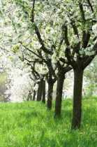 Enchanted Grove: Magical Property of Fruit Trees