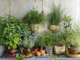 Hedgewitch Healing: Immunity Boosting Herbs
