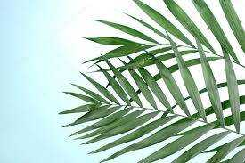 House Magic: Palm Leaf Protection Rite