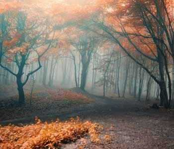 b2ap3_thumbnail_misty-autumn-forest.jpg