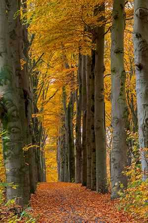 b2ap3_thumbnail_path-through-fall-trees.jpg