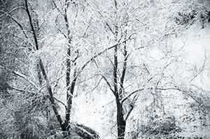 b2ap3_thumbnail_snowy-day-in-the-woods.jpg