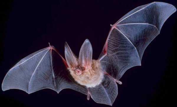 Bat Family: Facing The Shadows