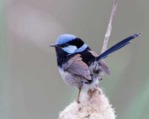 FAIRY-WREN: Discover the Deeper Truth