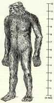 APEMEN (HAIRY HOMINOID): Shadow of Humanity