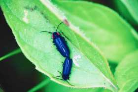 Firefly (Lightning Bug) Family: Recapture the Wonder