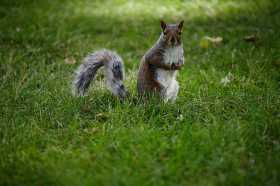 Squirrels: My Writing Muse