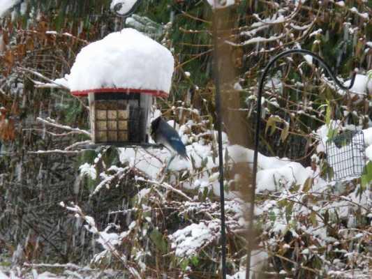 Feeding the Birds as a Spiritual Practice