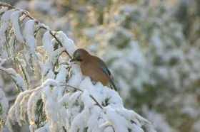 Walk the Winter Solstice