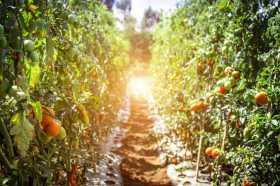 How Does Your Litha Garden Grow?