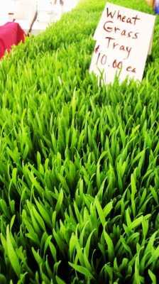 Natures Finest Medicine - Wheatgrass