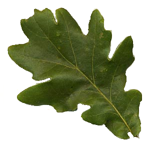 Foundations of Incense: Oak