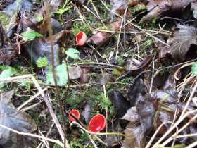 Nature red in tooth and elf cap