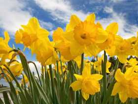 Welcoming the Light at the Spring Equinox