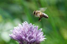 Bee Medicine – The Splendors of Honey