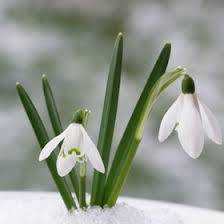 'Snowdrop, Snowdrop': A Magical Little Children's Song for Imbolc