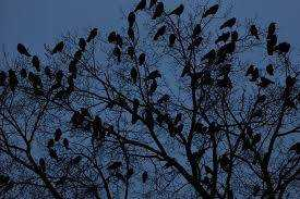 The Blessing of the Crows