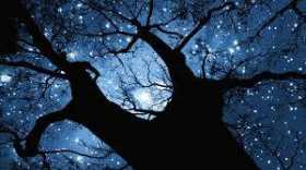 Is the Yule Tree an Ancient Pagan Custom?