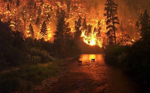 Pagan News Beagle: Earthy Thursday, August 27