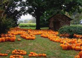 Pagan News Beagle: Earthy Thursday, October 22