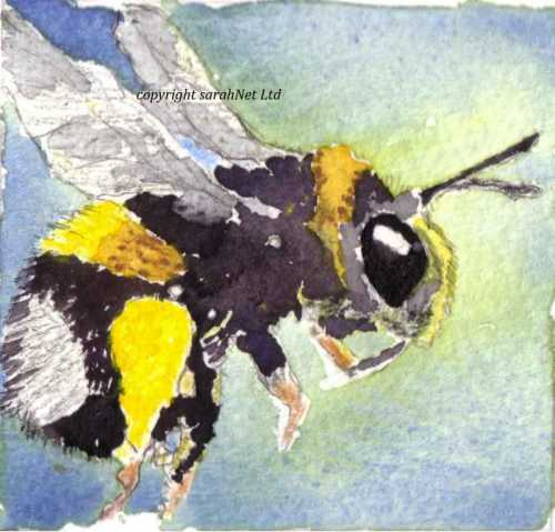 b2ap3_thumbnail_140216-White-tailed-bee.jpg