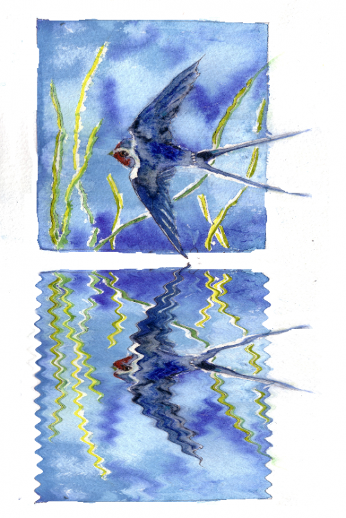 b2ap3_thumbnail_140506-swallows-ripple.png