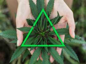 Cannabis Craft | The Witchcraft of the Green Goddess