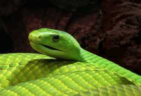 Snakes On A....Lararium!