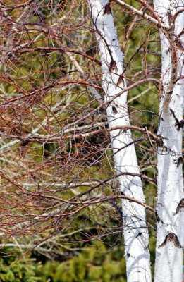 Sticks and Twigs