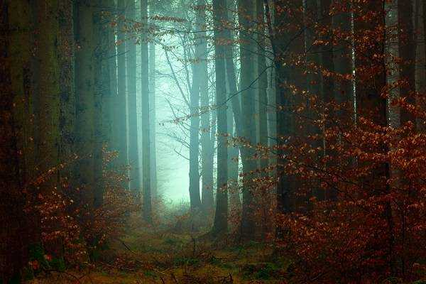 Know your forests and woodlands