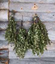 Birch: The Tree of Midsummer