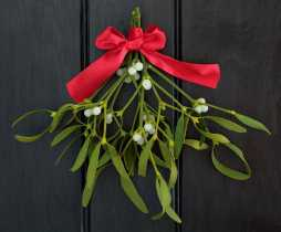 Mistletoe Means What?