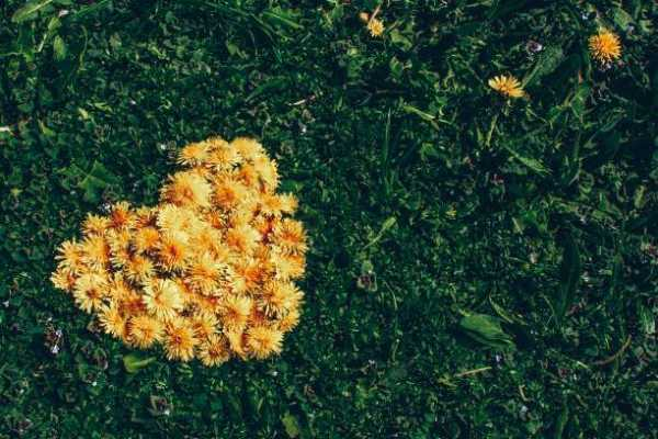 Sowing Seeds of New Love in Your Life