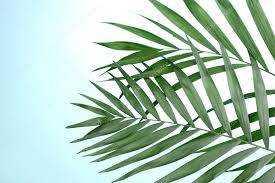 House Magic: Palm Leaf Protection Rite