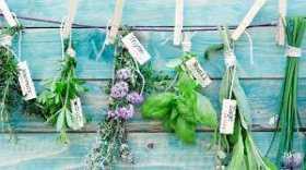 Hedgewitch Money Magic: Grow Prosperity Herbs
