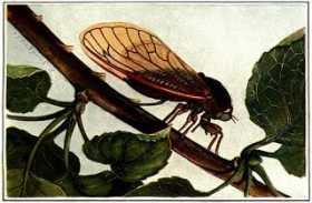 Periodic Cicada: The Nexus ofTime