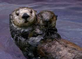 The Mighty Dead: Toola, the SeaOtter