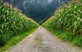 Let's Talk About Corn, Lugh, and Lammas