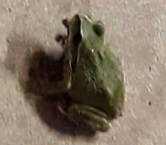 Transform A Frog (or other critter) Into An Incense Burner In 3 Easy Steps