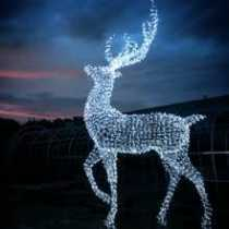 Stag of Light