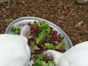 Ahimsa Grove: Vegan Pagan Thanksgiving Food, Family, and Gratitude